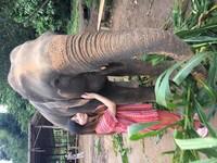 Bisa memeluk dan berinteraksi dengan gajah dari dekat