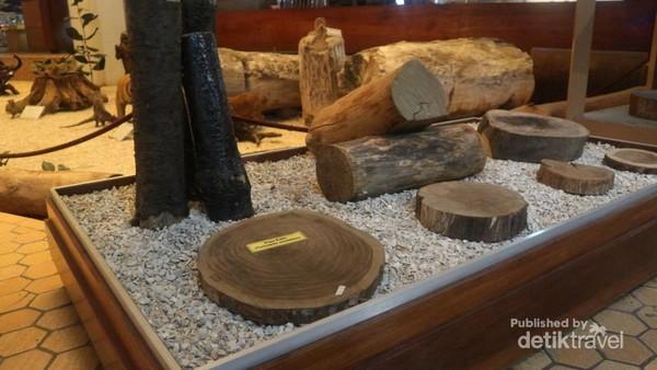 Aneka macam jenis kayu dan hasil hutan dapat kita temui dan pelajari di tempat ini