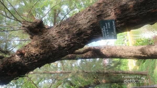Setiap pohon dilengkapi dengan label informasi sehingga kita juga bisa sambil belajar di tempat ini