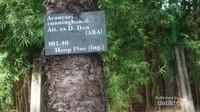 Tidak dipungut tiket masuk untuk menikmati kawasan Arboretum ini