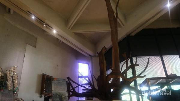 Wujud asli kayu cendana yang terkenal keharumannya