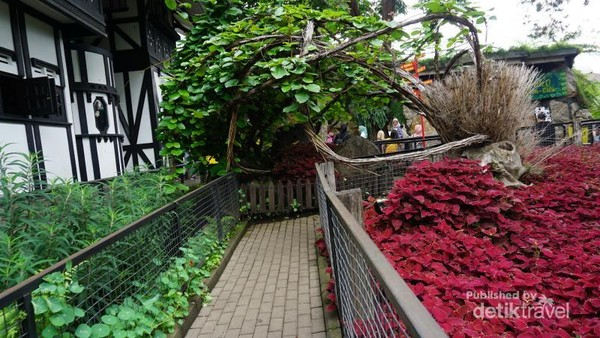 Jalan setapak dilengkapi tanaman berwarna warni ini sangat menarik diabadikan