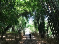 Hutan bambu yang hijau dan teduh, dilengkapi jalan paving sekeliling danau, memudahkan wisatawan menikmati keindahan alam sekitar.