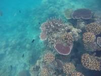 Jangan lupa untuk melihat keindahan bawah lautnya yang tak kalah menawan