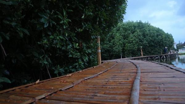 Trekking Mangrove ini sudah dibuka sejak tahun 2016