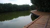 Jalur trekking mangrove terbuat dari bambu