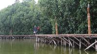 Trekking mangrove dibuat mengitari dan memasuki area hutan bakau yang teduh dan asri