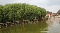 Trekking mangrove terbuat dari bambu sehingga ramah lingkungan dan tahan lama.