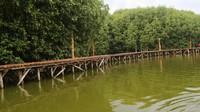 Tinggi trekking mangrove dari permukaan air lebih kurang 1 meter.