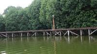 Trekking mangrove di kawasan ini dibuat mengitari area hutan mangrove
