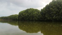 Sebagai kota pesisir pantai, hutan mangrove yang ada di Semarang sangat indah dan menarik