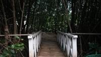 Ada juga jalur yang dibuat untuk masuk ke dalam hutan mangrove