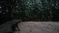 Tersedia tempat duduk untuk bersantai di dalam kawasan hutan mangrove