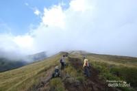 Sepanjang jalur menuju puncak kita akan disuguhkan pemandangan savana nan hijau