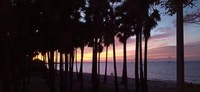 Ketika sunset deretan pohon sepanjang Pantai Oesapa akan kelihatan indah