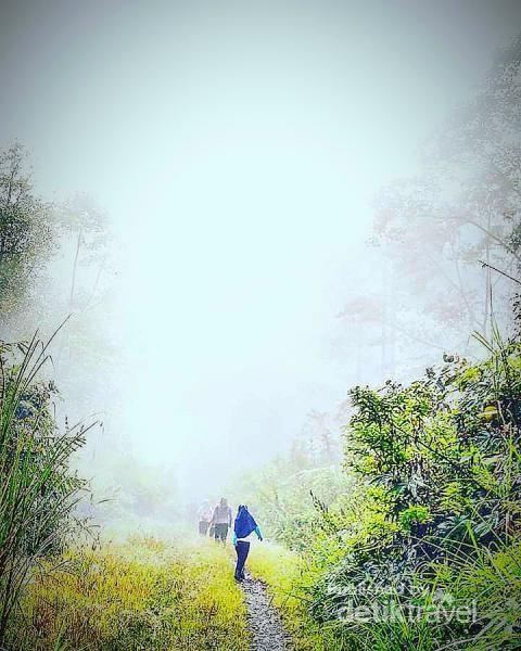 Awan menjadi teman dan.pesona wisata jalan kaki di Gayo