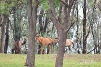 Kuda-kuda milik warga yang dilepas secara liar seakan menjadi penunggu perbukitan ini.