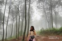 Pemandangan hutan pinus di Gunung Putri Lembang