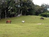 Sabana dan kuda-kuda liar ikut mempercantik tempat ini