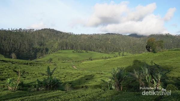 Pegunungan di Pangalengan yang cocok untuk menamam teh dan kopi.
