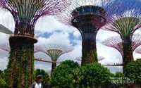 Supertree grove di Gardens By The Bay