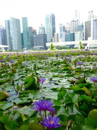 Waterlily ponds di Gardens By The Bay