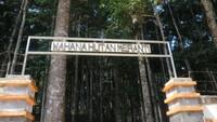 Deretan pohon meranti putih dan penangkaran burung Julang Mas bisa kita temukan di Wahana Hutan Meranti