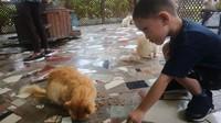 Di tempat ini si kecil bisa bermain dan memberi makan kucing yang lucu