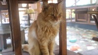 Kucing di tempat ini sangat jinak, jadi tidak membahayakan si kecil