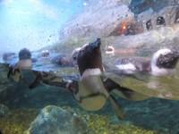 Pinguin di Sea Life Ocean World