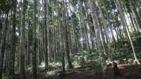 Sesuai namanya, terdapat deretan pohon Meranti putih yang ditanam sejak tahun 1976.