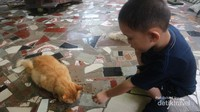 Disini si kecil bisa bermain dan berinteraksi dengan kucing-kucing lucu