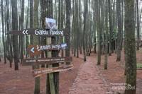 Hutan pinus ini dilengkapi gardu pandang , taman bunga , penyewaan hammock dan lain-lain.