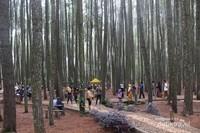 Meski pengunjung cukup ramai , hutan pinus ini masih dapat dinikmati dengan leluasa karena cukup luas.