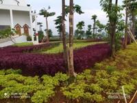 Taman yang cantik di sekitar mesjid