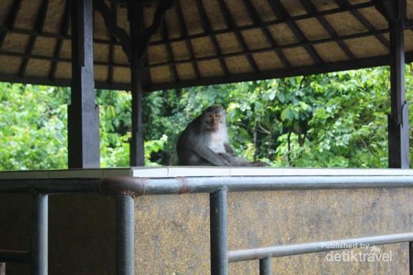 Monyet penghuni tempat wisata