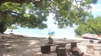 Seekor kera ekor panjang sedang berteduh di Pantai Bama