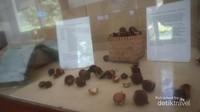 Kacang macadamia yang merupakan kacang termahal di dunia