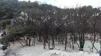 Pepohonan yang diberi kapas agar memberi kesan seperti salju