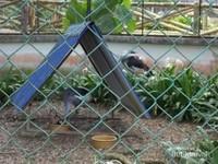 Koleksi Burung di Taman ini dengan kandang dan tempat berteduh.