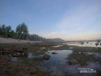 Dibeberapa area tumbuh pohon kelapa yang turut mempercantik pantai.