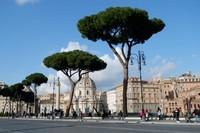Suasana di area sekitar Forum Roman dan Coloseum.
