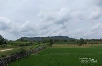 Persawahan indah di Kecamatan Panceng, spot dari warung ibu penjual legen.