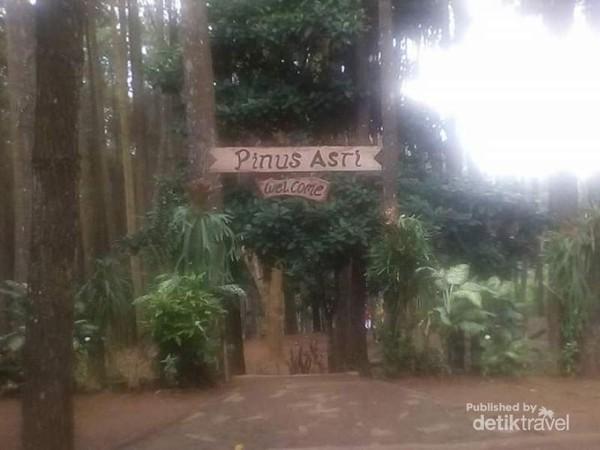 Pinus Asri menyambut kita dengan Welcome to Pinus Asri.