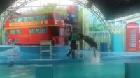 Walau bertubuh besar, namun singa laut cukup gesit saat melompat dari air
