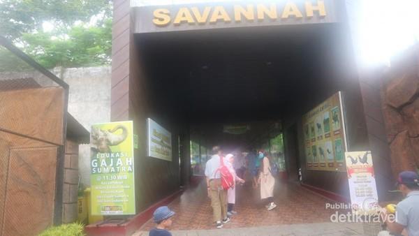 Savannah adalah salah satu zona di Batu Secret Zoo.