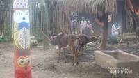 Di dalam kandang ini terdapat beberapa hewan-hewan khas Afrika.