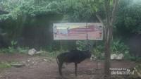Di Savannah terdapat Rusa, Zebra, gemsbok dan berbagai satwa lain.