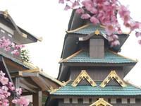 Pengunjung dapat berfoto dengan latar istana Jepang dan bunga sakura.