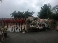 Aneka jenis harimau di Batu Secret Zoo bisa kita jumpai di zona Tiger Land